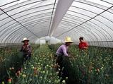 动植物养殖纤维布风管